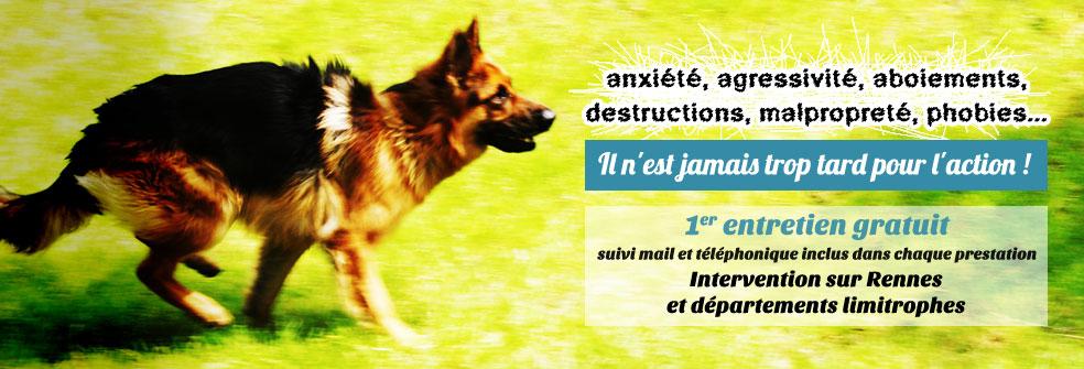 chien berger allemand éducateur canin comportementaliste canin rennes