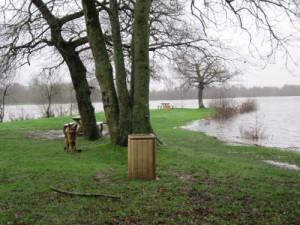 les étangs d'Apigné, Au Poil Dans Mes Pattes, éducateur canin comportementaliste Rennes
