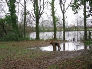 chien berger allemand aux étangs d'Apigné, Au Poil Dans Mes Pattes, éducateur canin comportementaliste Rennes
