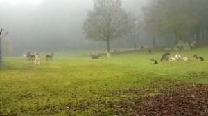 cerfs et faons, parc des Gayeulles à Rennes, Au Poil Dans Mes Pattes!