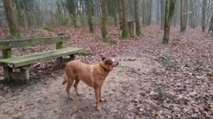 Chien dans l'Aire de liberté canine du parc des Gayeulles à Rennes, Au Poil Dans Mes Pattes!