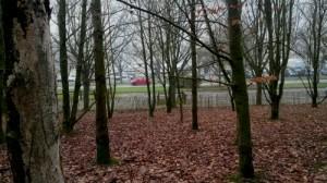 Aire de liberté canine du parc des Gayeulles à Rennes, Au Poil Dans Mes Pattes!