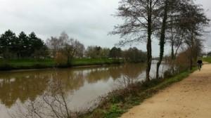 chien berger allemand le long de la Vilaine à Rennes