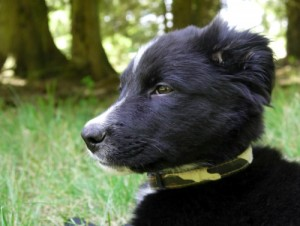 chiot noir, Au Poil Dans Mes Pattes! éducateur canin comportementaliste Rennes