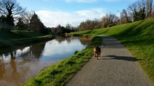 Promenade le long du canal Saint Martin à Rennes, AU POIL DANS MES PATTES!