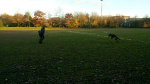 AU POIL DANS MES PATTES! Educateur canin comportementaliste sur Rennes, 35 et départements limitrophes