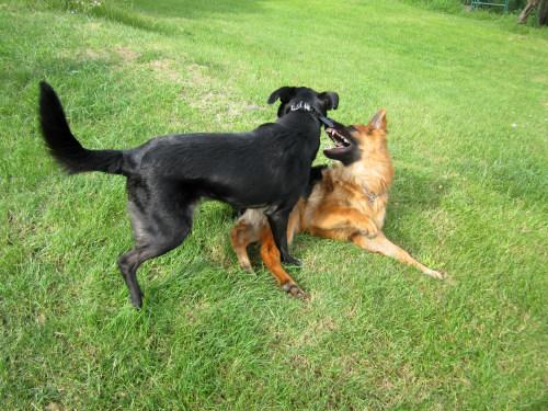 rencontre proprietaire de chiens