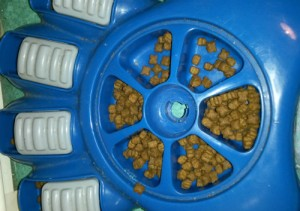 Gamelles intelligente, le choix du matériel pour le chiot et le chien, Au poil dans mes pattes! éducateur canin comportementaliste 35