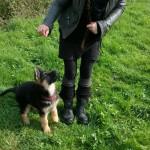 La socialisation du chiot, Au poil dans mes pattes! Comportementaliste et éducateur canin sur Rennes et 35