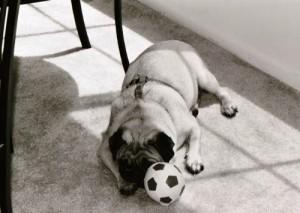 L'alimentation du chien et du chiot; Au poil dans mes pattes! Comportementaliste éducateur canin sur Rennes et 35
