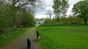 Sorties canines ou sortir son chien à Rennes; au poil dans mes pattes! comportementaliste éducateur canin sur 35, Ile et vilaine, Bretagne