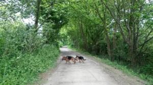Sortir son chien à Rennes, Au poil dans mes pattes! Comportementaliste et éducateur canin 35
