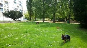 Sortir son chien à Rennes, Au poil dans mes pattes! Comportementaliste canin éducateur 35