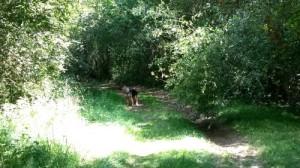 Vivre à Rennes avec son chien, étang de Bruz. AU POIL DANS MES PATTES! Comportementalise éducateur canin Rennes, Bruz, Melesse, Betton, Maure de Bretagne, Pipriac, Guichen, Plélan le grand, Noyal sur Vilaine.... ILLe et Vilaine Bretagne 35