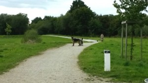 rencontre entre un chien adulte et un chiot rencontre adulte rennes