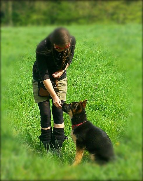 Comportementaliste et éducateur canin à Rennes - Ille et