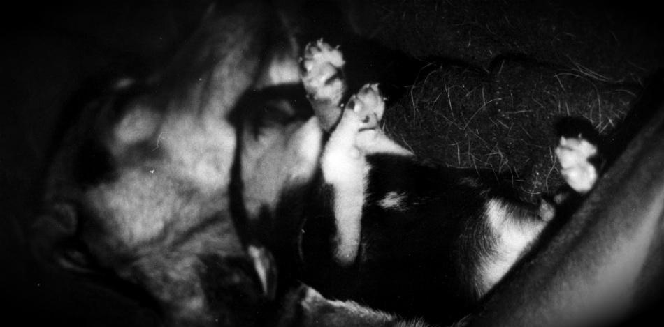 Phénomène d'attachement, troubles du développement,éducation du chiot, Au poil dans mes pattes, éducateur canin, comportementaliste canin, education du chien, rééducation comportementale, éducation du chiot, Rennes, ille et vilaine