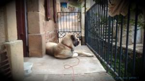 la qualité du lien, Relation homme-chien, Au poil dans mes pattes, éducateur canin, comportementaliste canin, education du chien, rééducation comportementale, éducation du chiot, Rennes, ille et vilaine