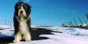 Races de chiens, matériel et bons plans
