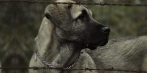 Actualité canine et législation