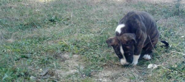 chiot marine Piat Au Poil Dans Mes Pattes! éducateur canin comportementaliste Rennes