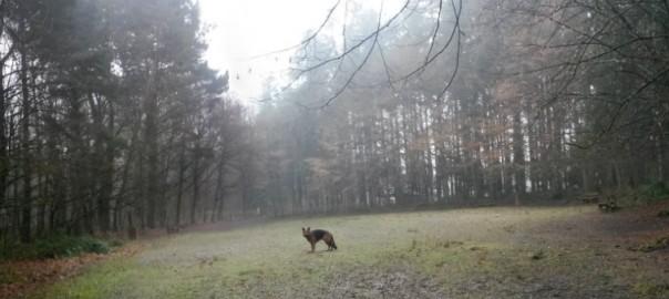 Chien berger allemand dans l'aire de détente canine du Parc des Gayeulles à Rennes, Au PoilDans Mes Pattes!