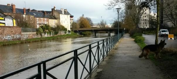 Sortir son chien à Rennes, rue Alain Gerbault , AU POIL DANS MES PATTES, éducateur canin comportementaliste 35