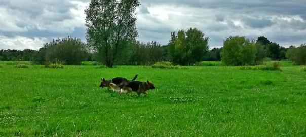 Sortir son chien à Rennes Saint Jacques de la Landes, AU POIL DANS MES PATTES! comportementaliste éducateur canin sur Rennes, ille et Vilaine, 35. Bruz, Noyal Chatillon sur Seiche, Pléan le grand, Redon, Maure de Bretagne, Pipriac....