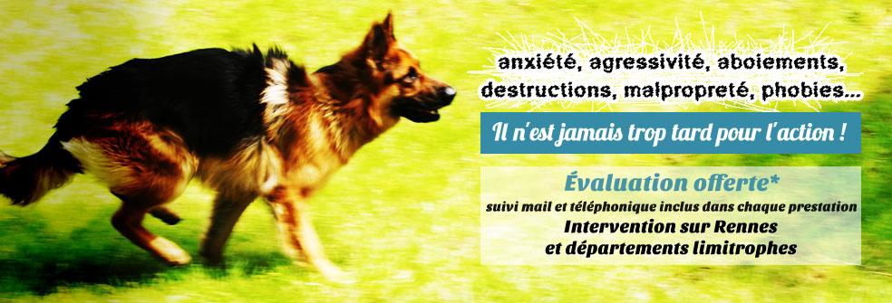 éducateur comportementaliste canin